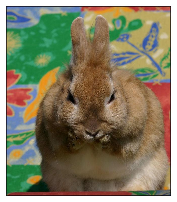 bin ich froh dass ostern vorbei ist foto bild tiere haustiere nagetiere kaninchen. Black Bedroom Furniture Sets. Home Design Ideas