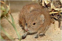 Bin keine Maus!