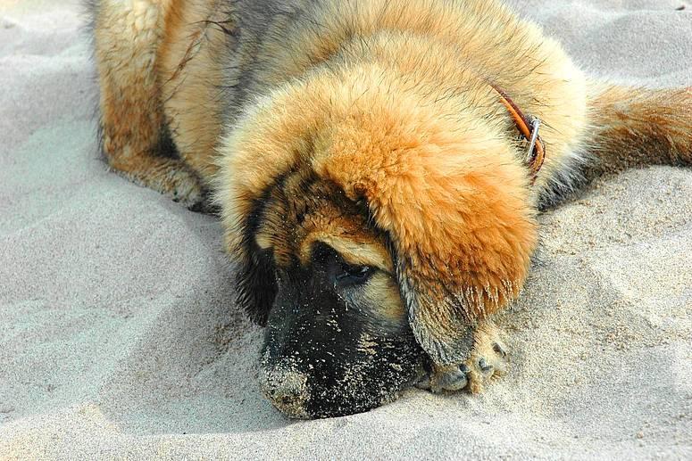 Bin Müde vom Spielen und Toben am Strand ( Dukor )