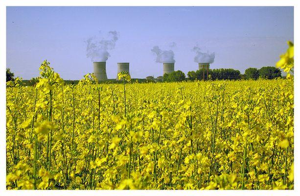 Biodiesel oder Atomkraft