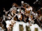 Bionischer Eistest auf Biegsamkeit