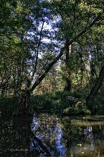 Biosphärenreservat Spreewald (2)