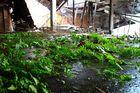 Biotop (2)