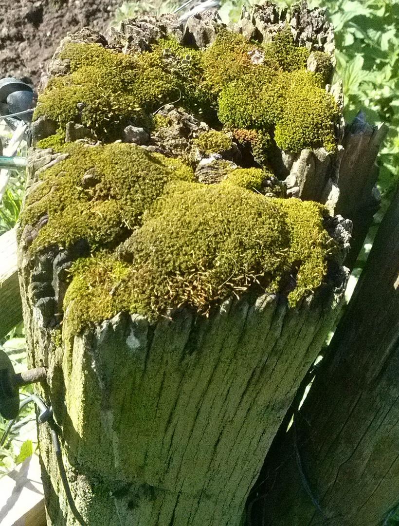 Biotop auf einem alten Zaunpfahl