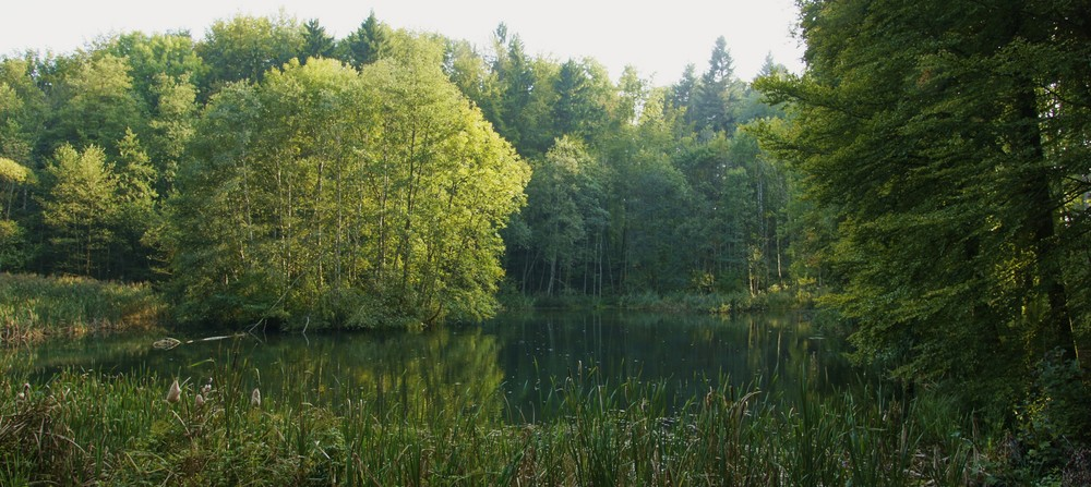 Biotop im Wald