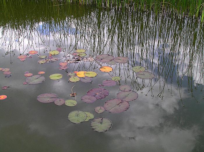 Biotop... Reinste Natur