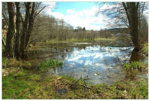 Biotopsee im Erzgebirge