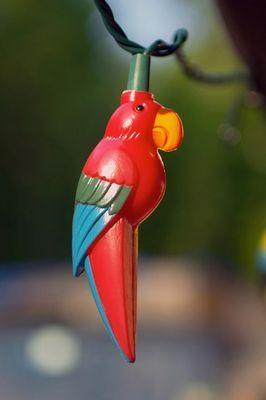 Bird!!!!!!!!!!!!!!