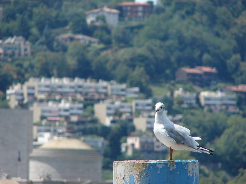 bird by como