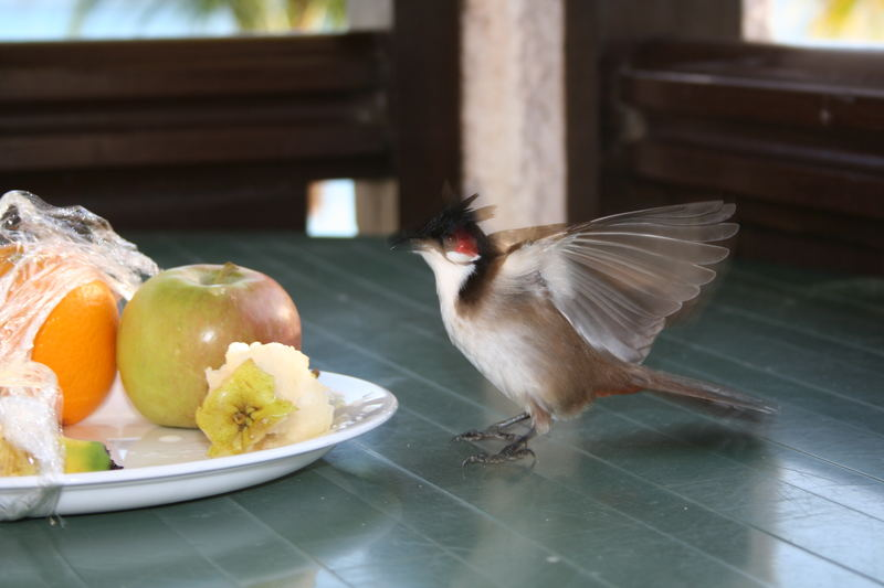 Bird eating fruits...