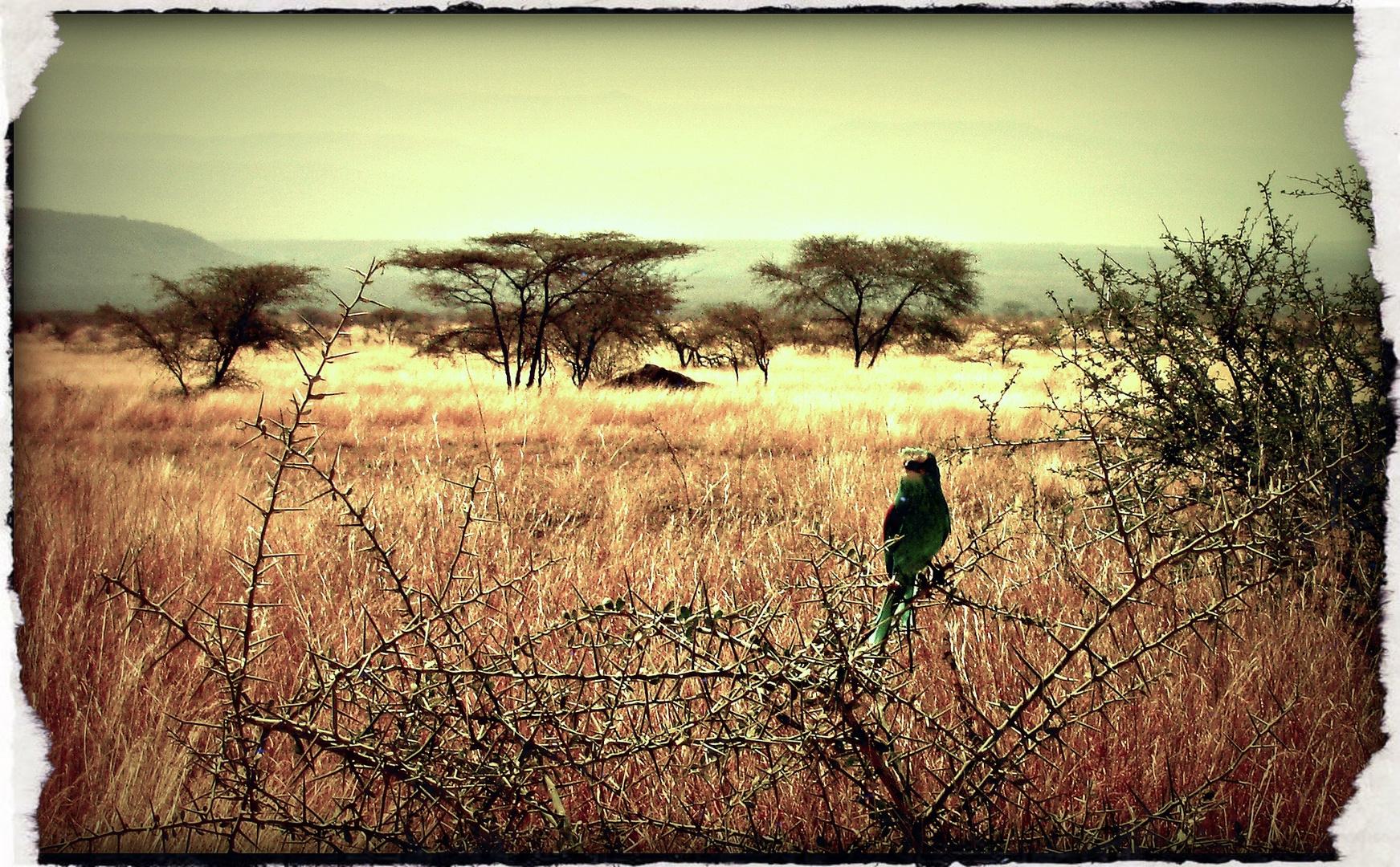 Bird (Ethiopia)