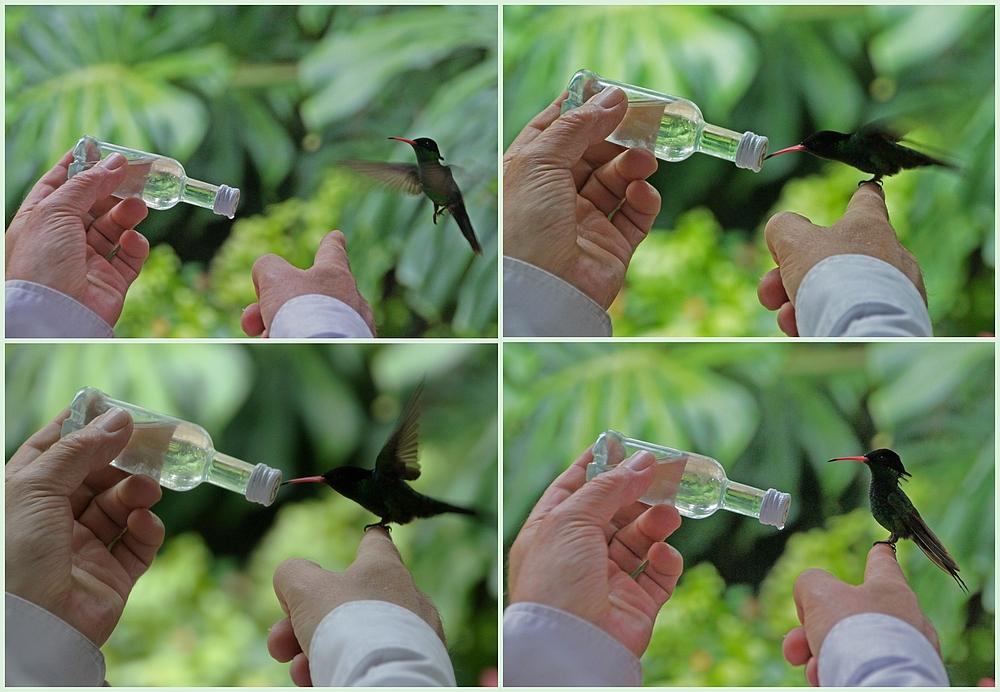 ..Bird Feeding..