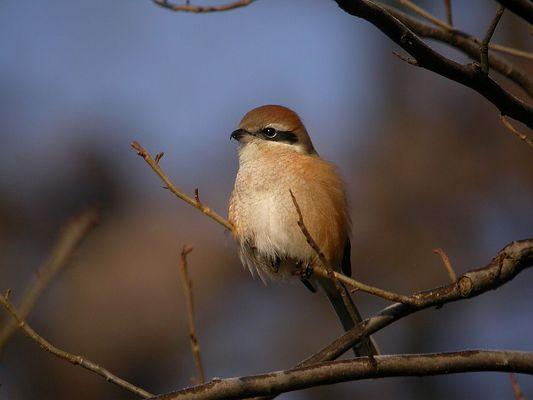 bird in China