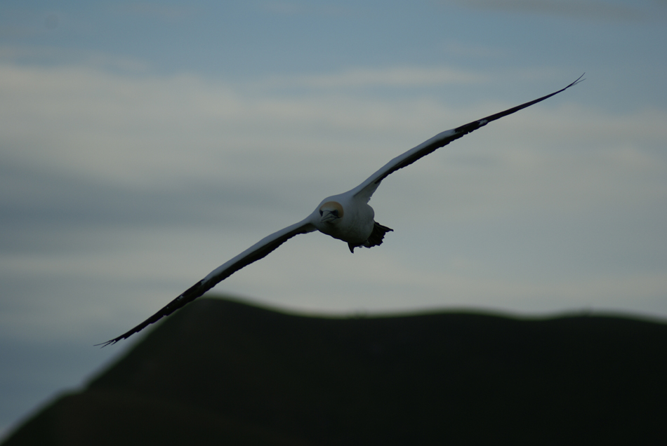 Bird in NZ