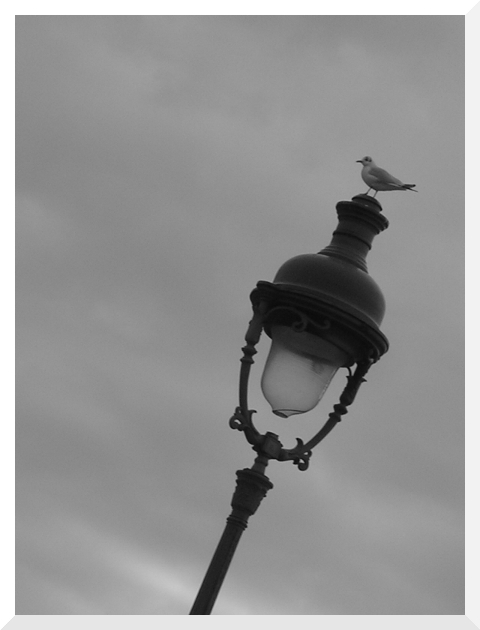 Bird In Paris