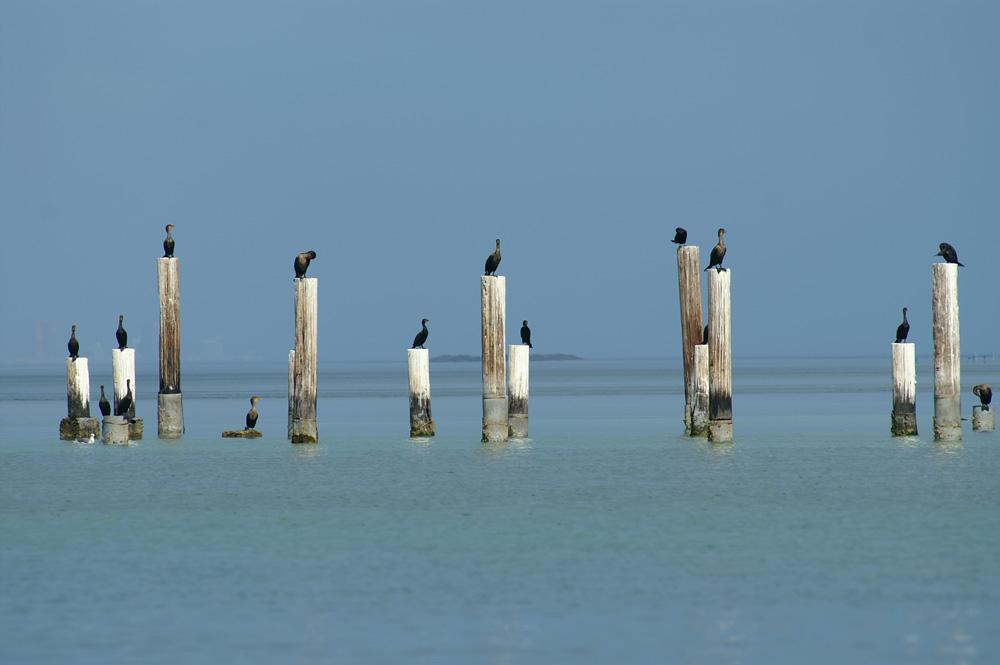 Bird Line-Up