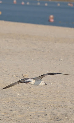 Bird , Mamzar , Dubai
