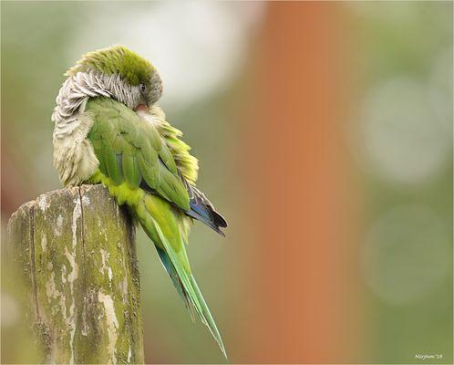 Bird of paradise ..