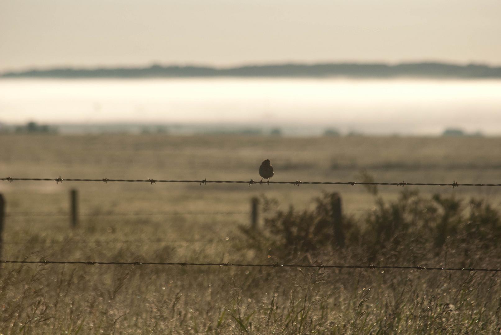 Bird on a fence, Alberta, Canada