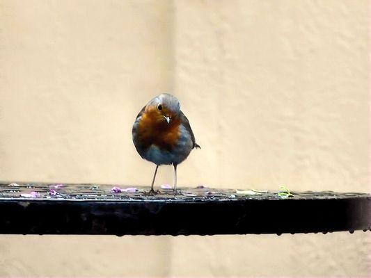 Bird on a wet table