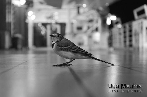 Bird On Deck