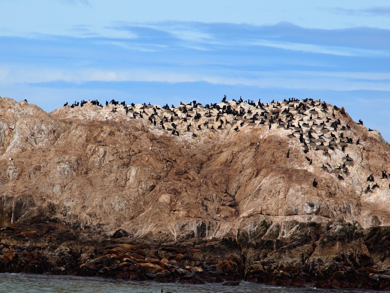 Bird Rock (USA) Monterey by Olympus E-PL1