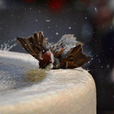 Bird washing