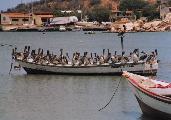 bird_boat