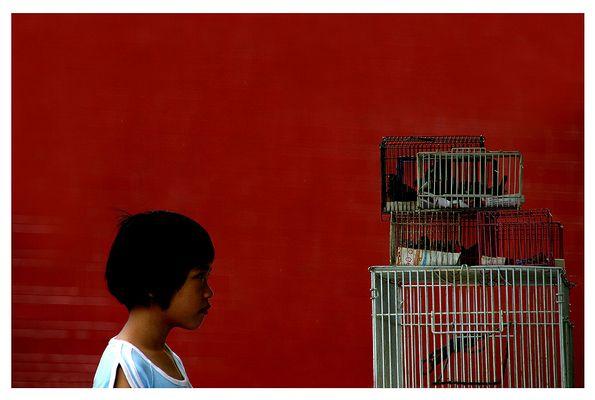 birds cage - reload