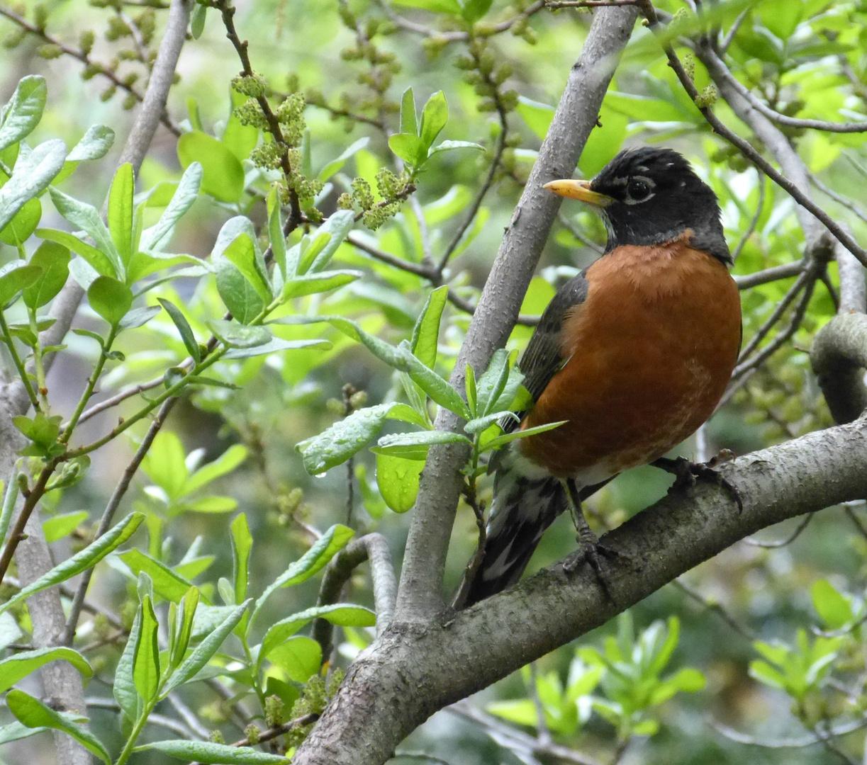 birds in NY 9