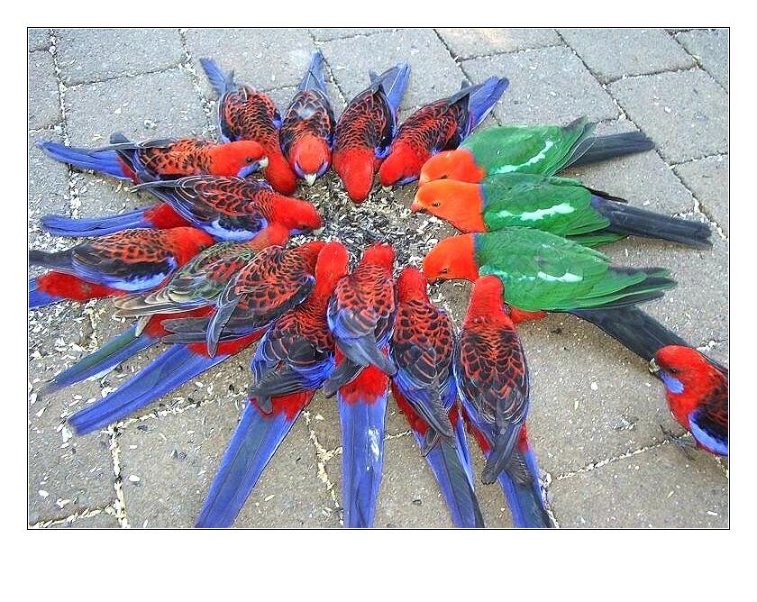 ... birds in qld ...