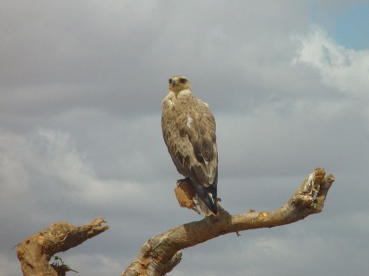 Birds of Tsavo