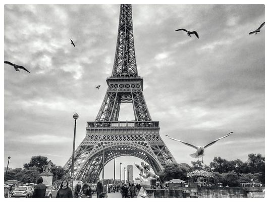 Birds on Tour Eiffel