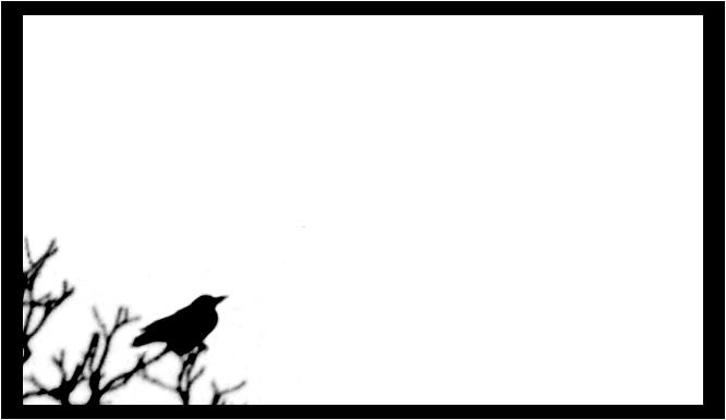 bird`s shadow