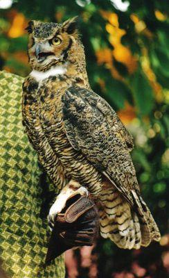 Birdshow im Animal Kingdom
