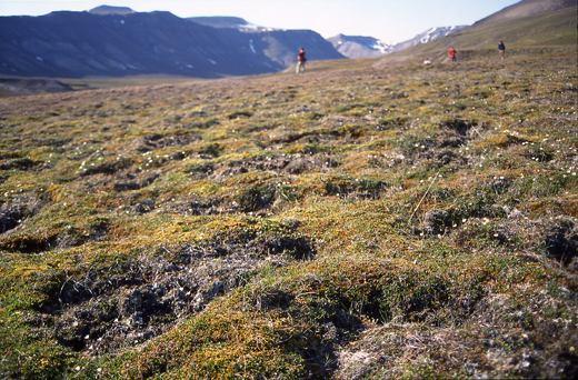 Birdwatching in SpitZbergen