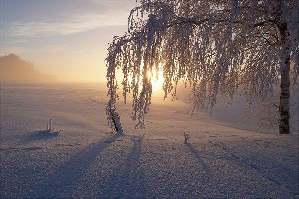 Birke am Morgen im Winterwunderland