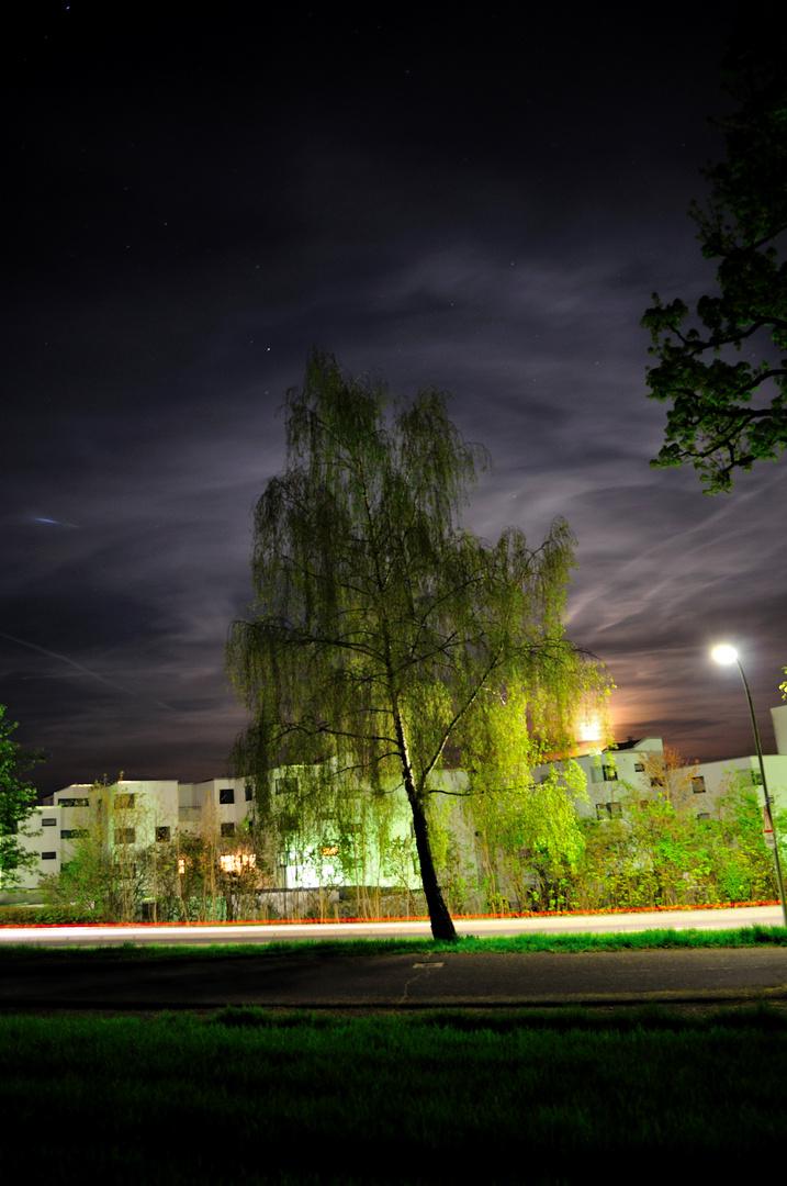 Birke bei Nacht