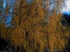 Birke im Sonnenlicht