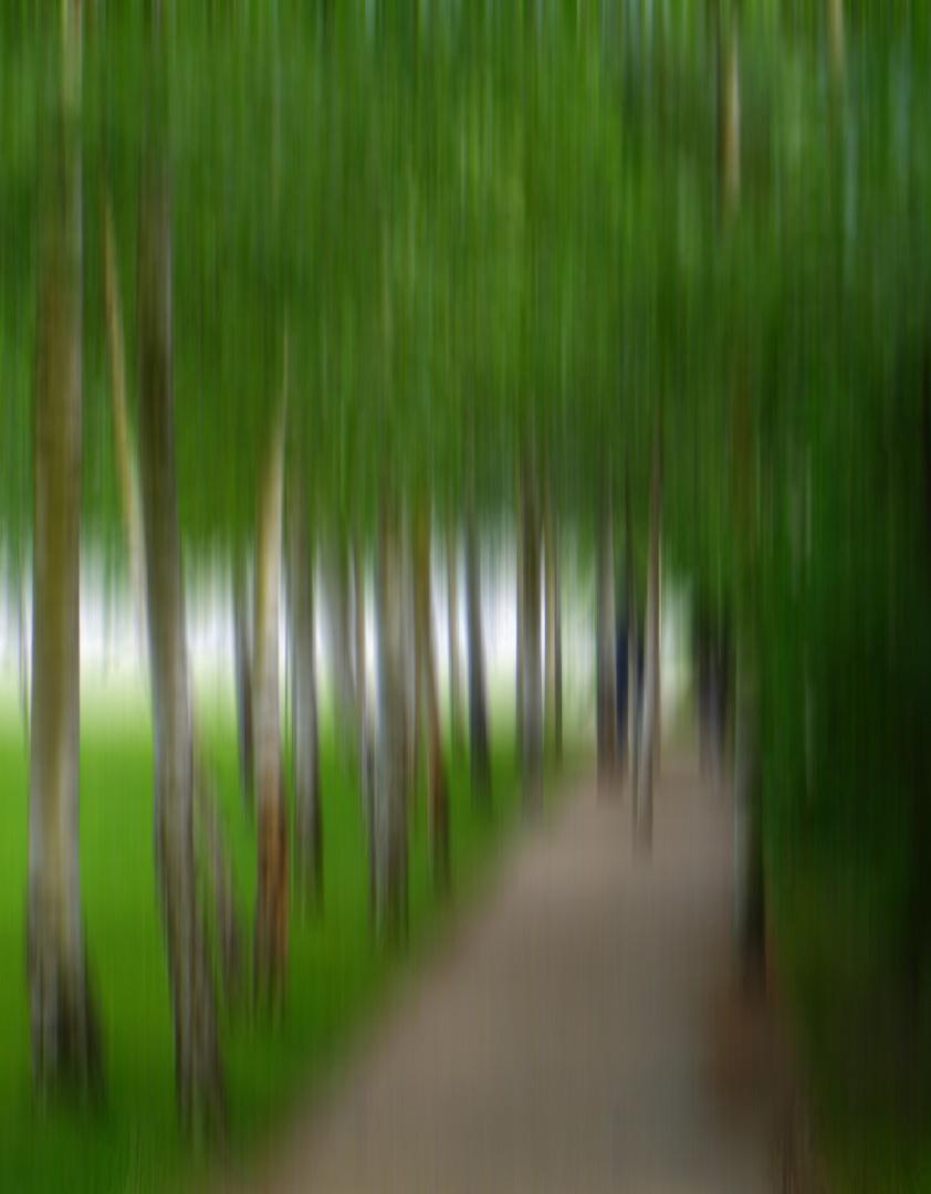 Birken im Garten der Liebermann Villa