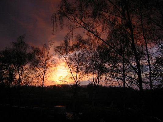 Birken in der Abendsonne