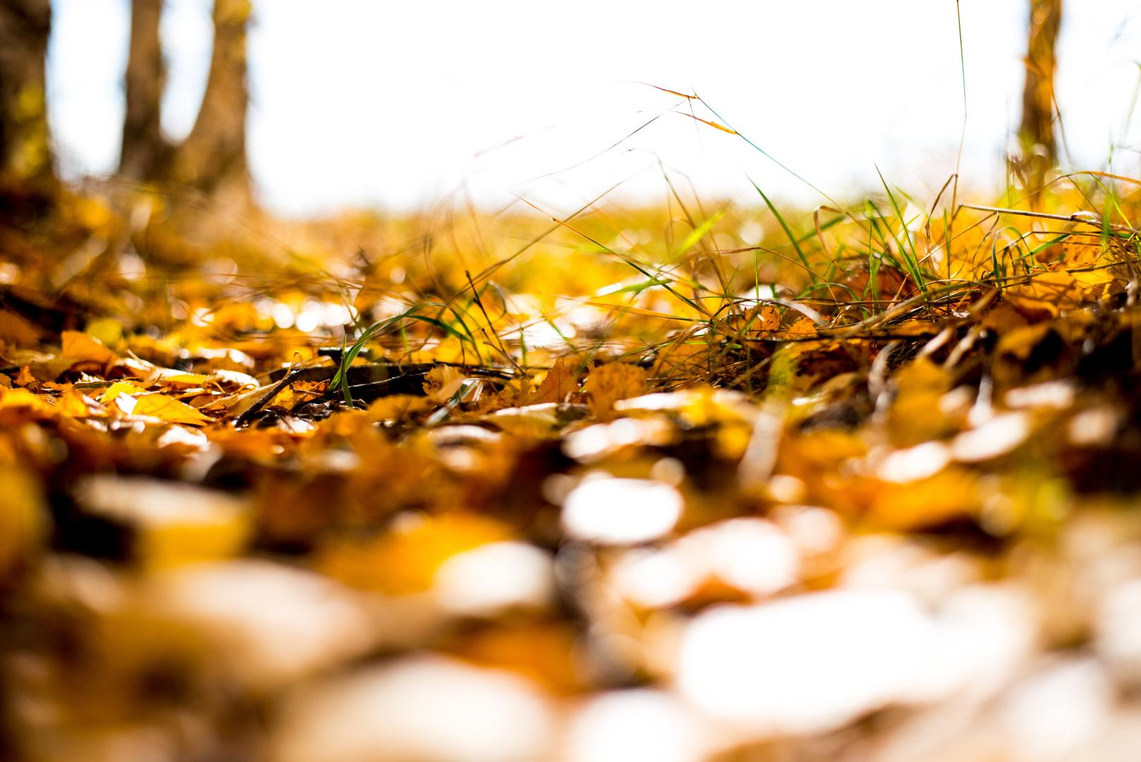 Birkenblätter auf der Erde
