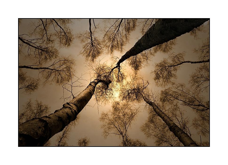 Birkenwald 1 by Marco