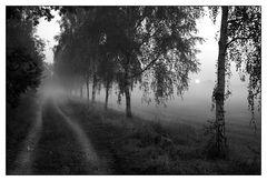 Birkenweg im Morgennebel
