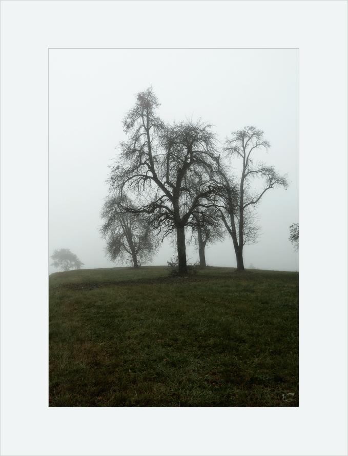 Birnbäume im Nebel