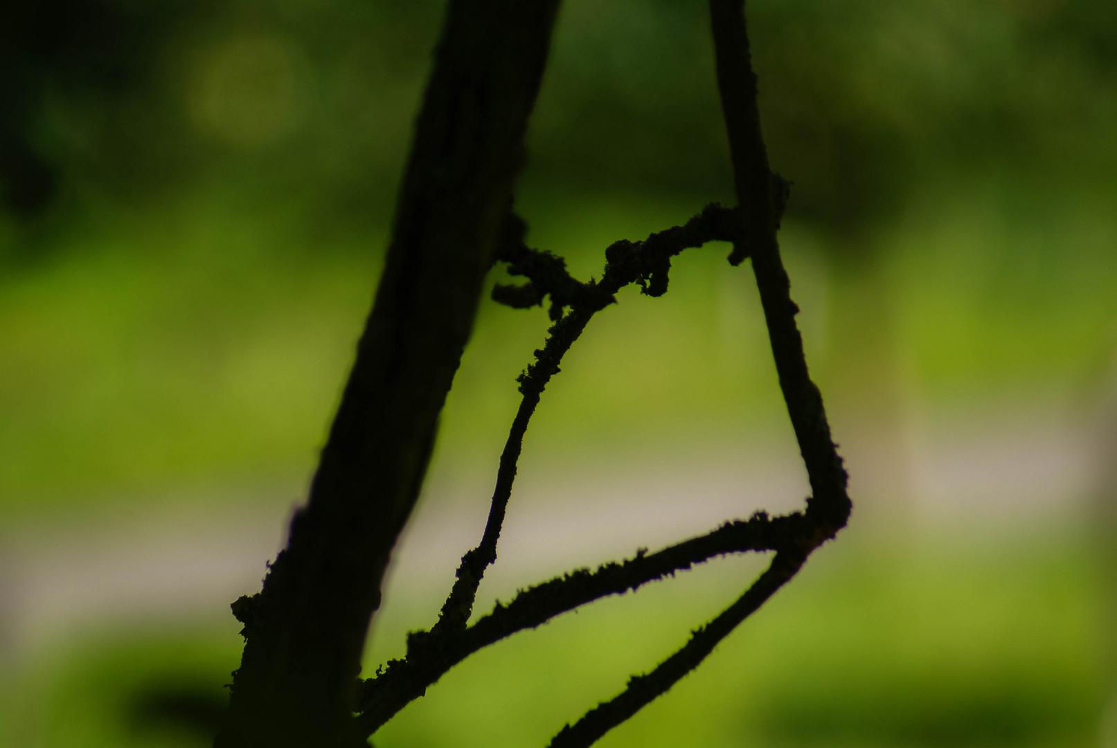 Birnenbaumäste