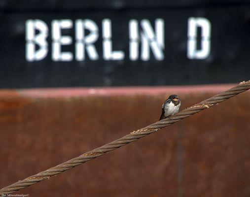 Bis vor es in den  Süden geht schnell nochmal nach Berlin?