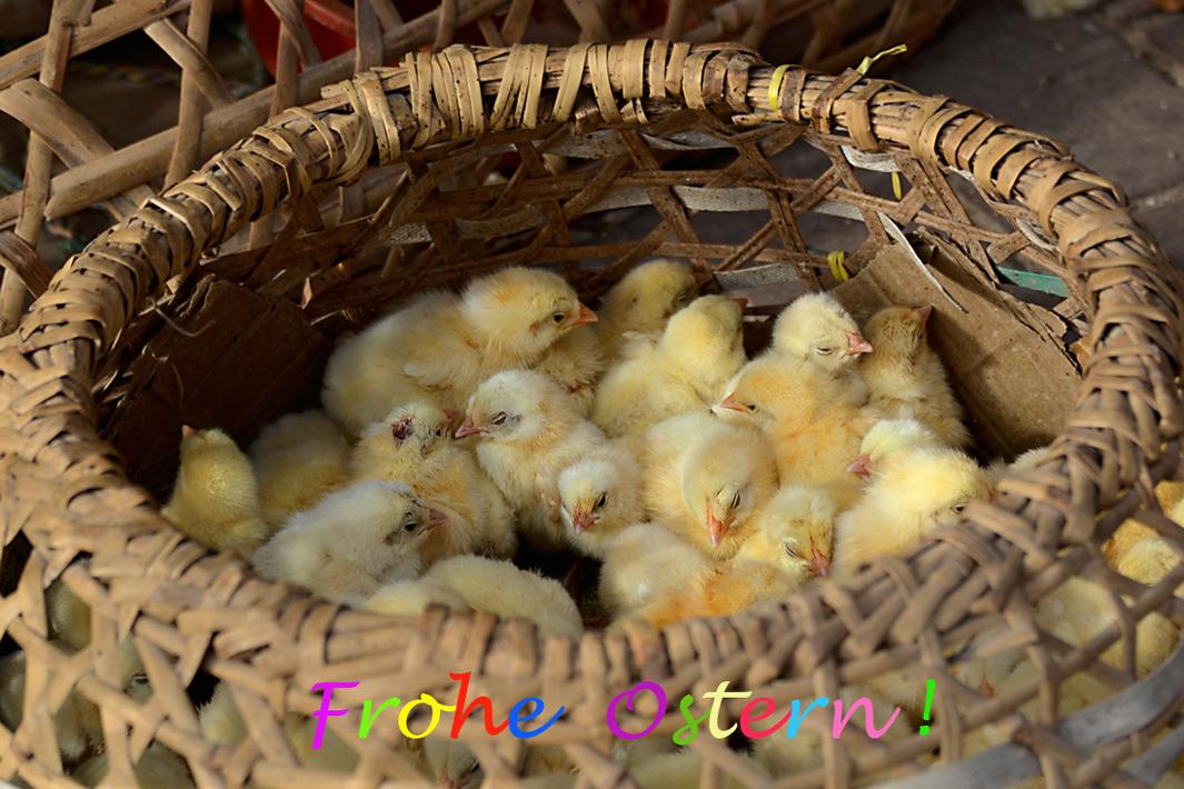 bis wir Eier legen dauert es noch...