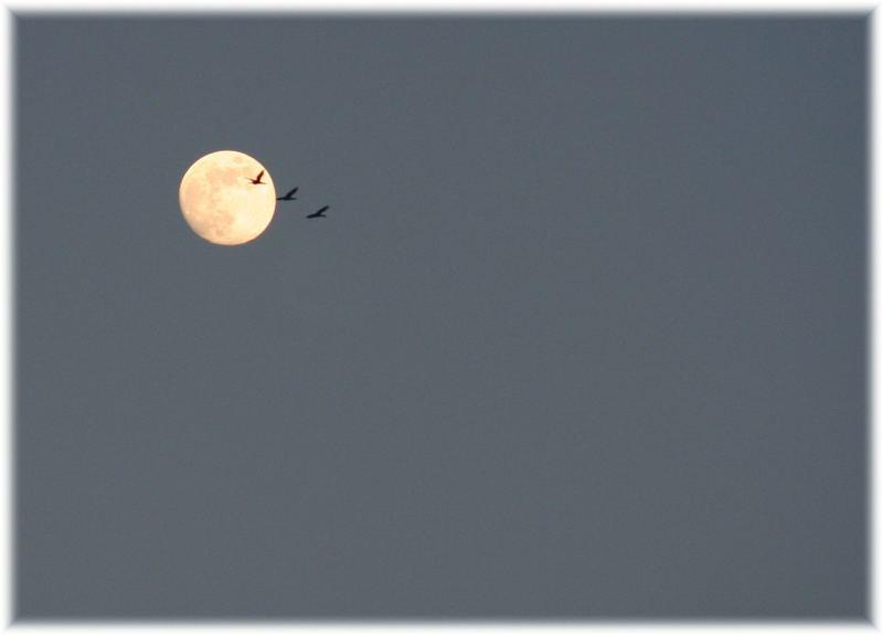 Bis zum Mond .....