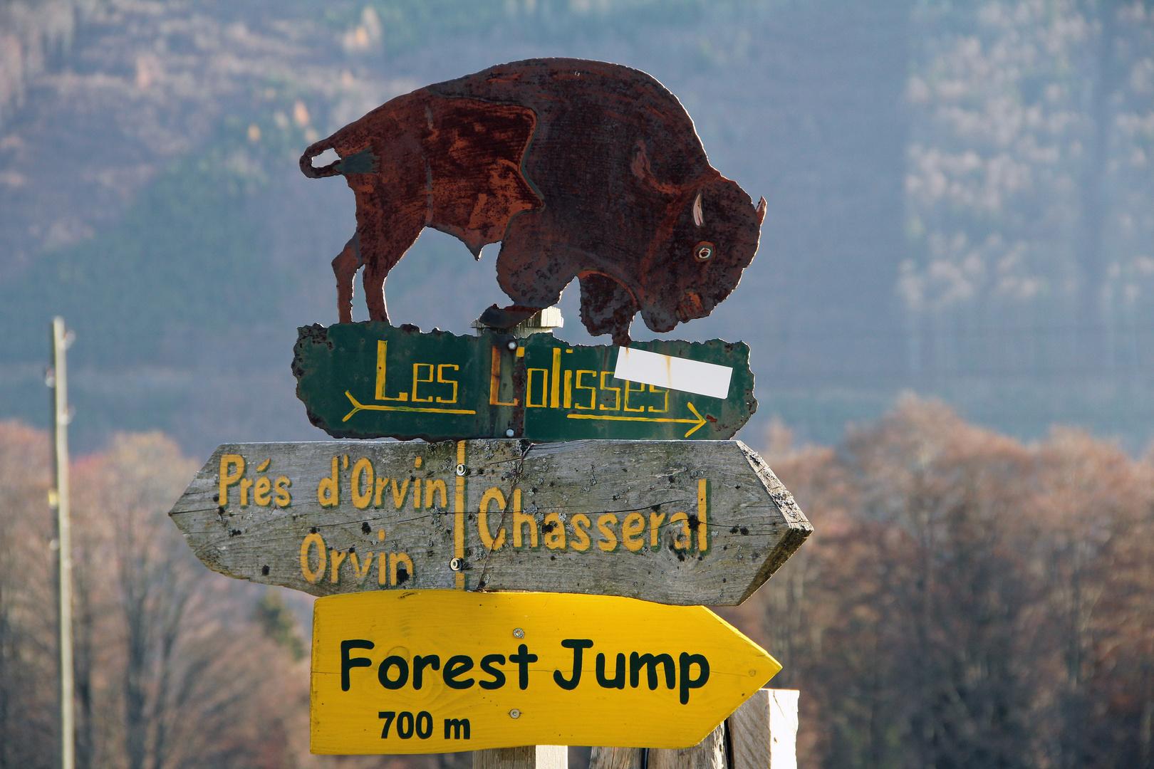 Bison Park im Berner Jura